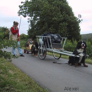 hundehvalpe til salg fyn