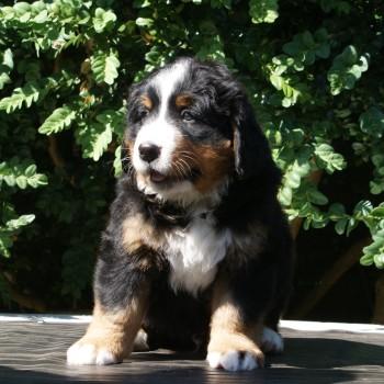 Romeo, 6 uger Vægt: 6100 g