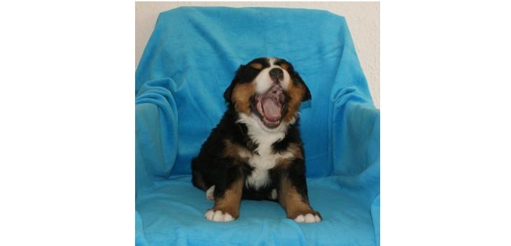 yawnromeo1